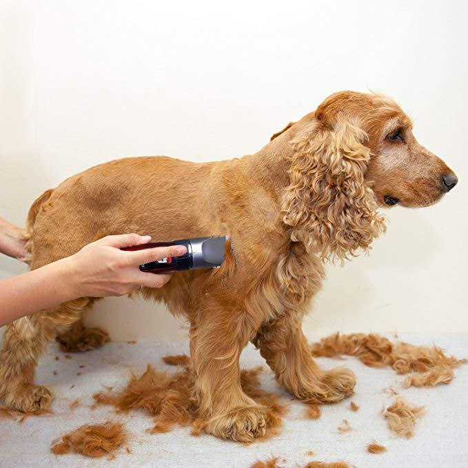 Mejores cortapelos de perros